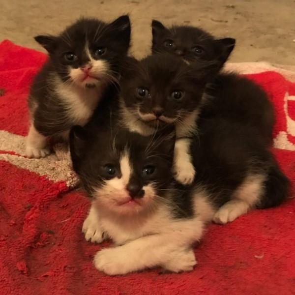 <br> 兩個月前艾森救回一隻黑貓,也同樣生下四隻小賓士(圖/IG@zikrettinn)