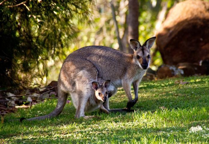 「背包課稅」歧視國籍 澳洲法院判定違法