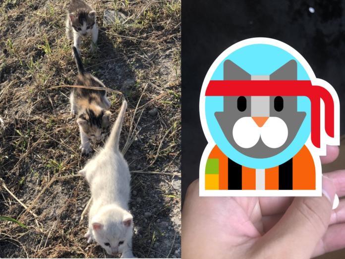 貓的報恩?推主拯救被烏鴉攻擊的三隻小貓 竟立刻招好運!
