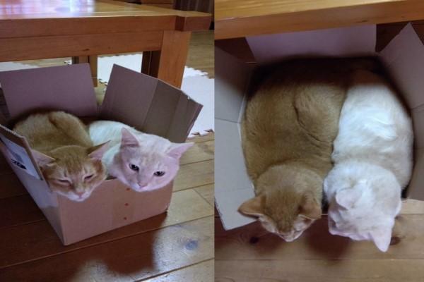 <br> 由於推主家裡已經收養兩隻也曾經是浪浪的貓咪,因此無法將全部的小貓都留下(圖/twitter@BlackBox514)