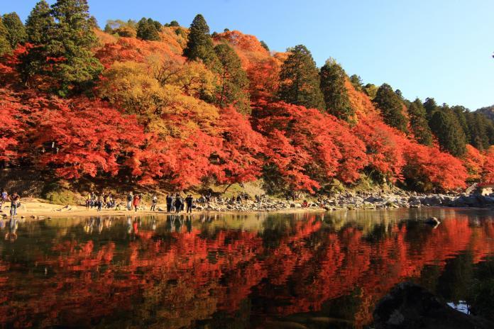 <br> ▲綠、黃綠、黃、橙、紅色的「五色楓紅」。(圖/香嵐溪)