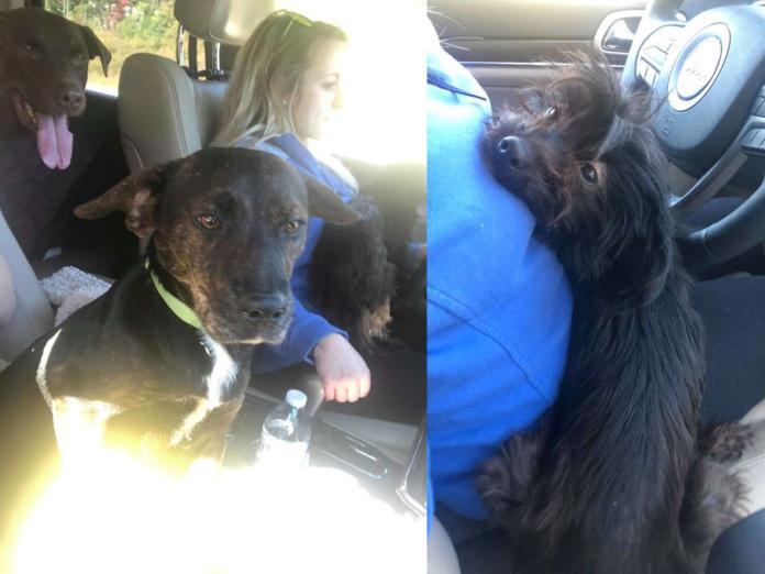 女子本來只想領養一隻狗 從收容所回家卻整車坐滿!