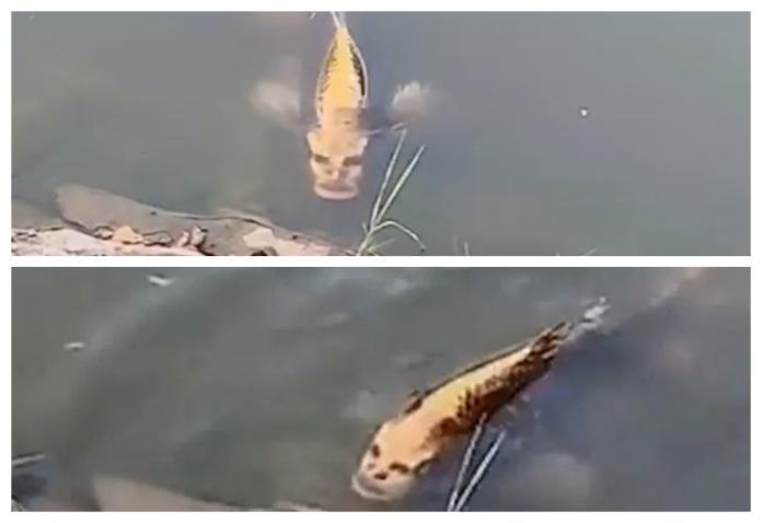 外星生物來了? 雲南風景區驚見人面魚