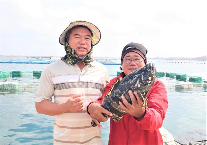 澎<b>箱網養殖</b>王國 明年力推龍膽石斑打造優質海產
