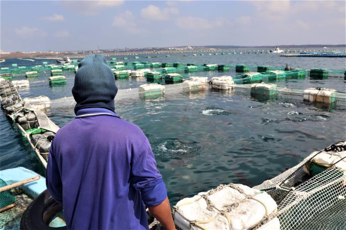養殖寒害保險增鱸魚、吳郭魚 氣溫連續低於10度啟動理賠