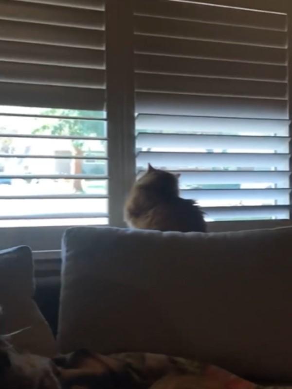 <br> 幾個回合之後,卡洛特索性連隔壁的百葉窗也一起打開!(圖/翻攝自FB@Nicole Jones)