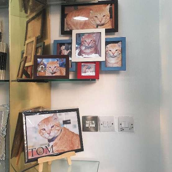 阿拉伯貓咪收編沖印店 成當地偶像攬生意