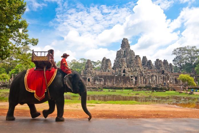 吳哥窟大象載客操到過勞死 ! 明年起全面禁止騎大象