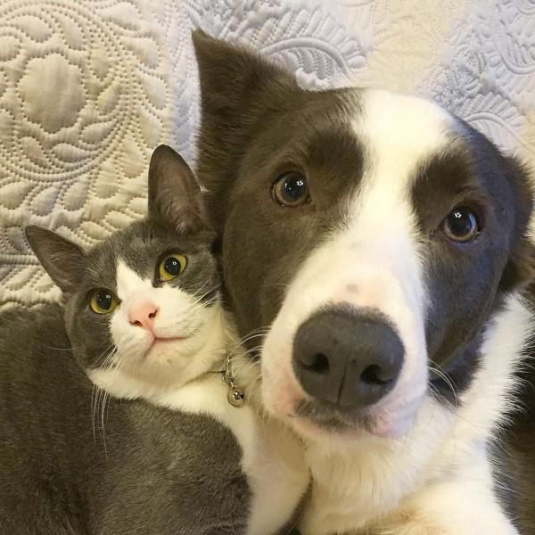 <br> 賓士貓傑瑞與牧羊犬朗帝是跨種族的好朋友,擁有類似花色的牠們成為超閃的「賓士CP」(圖/IG@yurin555)