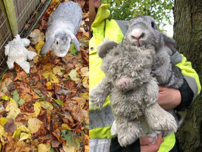 寒冬中兔兔被裝箱遺棄路邊 緊抱最愛熊玩偶:我們的家呢?