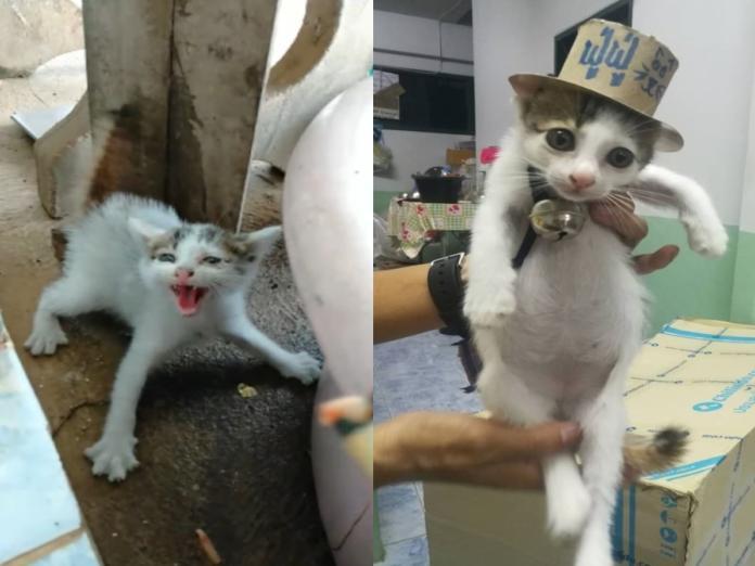 泰國小浪喵見人炸毛狂噴氣 以肉泥誘惑貓咪:有點好吃?