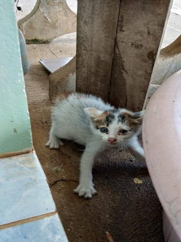 <br> 泰國網友Bua Chan在路邊發現這隻獨自流浪的小貓,一臉金派的模樣(圖/翻攝自FB@ฟู่ฟู่ ขู่จนได้บ้าน)