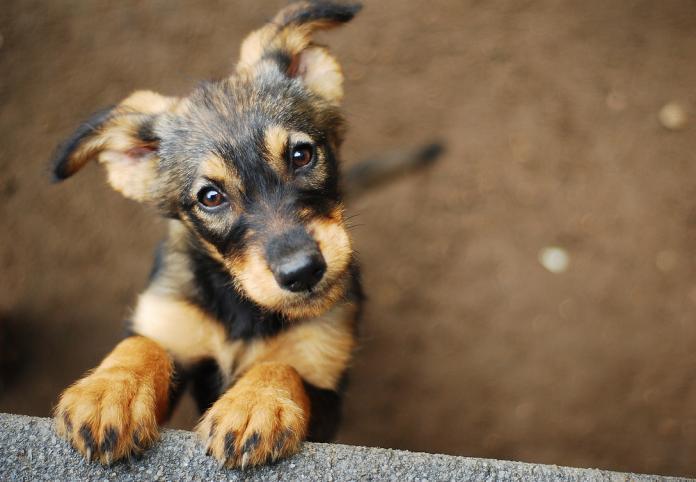 dog shutterstock_587562362