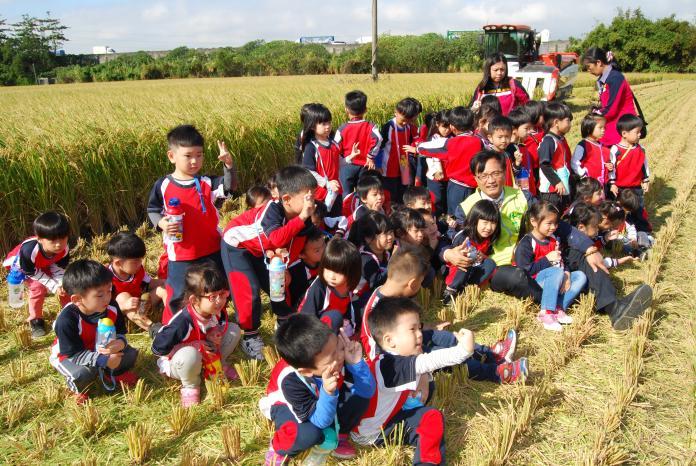 <br> ▲彰化市立幼兒園幼童到位彰草路123巷旁附近的一處農田,觀察與體驗稻米收割過程。(圖/記者陳雅芳攝,2019.11.22)