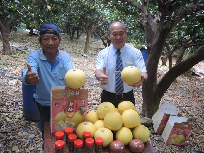 影/唯一外銷日本的白柚 酸中帶甜,口感極佳