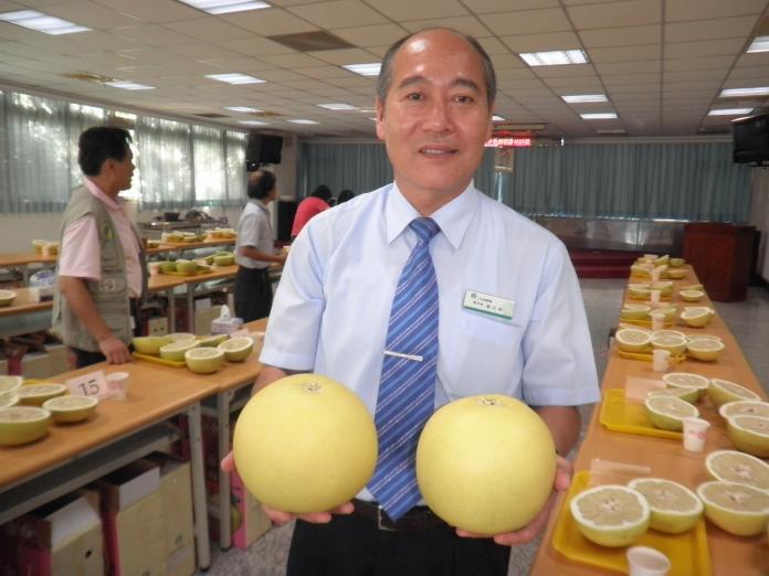 <br> ▲二水鄉白柚吃起來酸中帶甜,口感極佳。(圖/記者陳雅芳攝,2019.11.23)