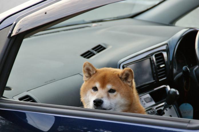 三寶駕駛「原地自轉1小時」 警湊近一看傻眼:狗在開車