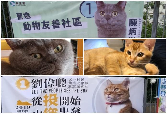香港區選最佳助選員!議員競選文宣上印貓主子代奴出征