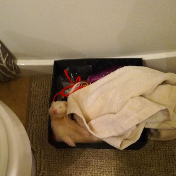 <br> 潔西卡為牠準備專用小床還蓋被被,看牠睡到翻肚想必過得很素西!(圖/imgur@bimbumbim)