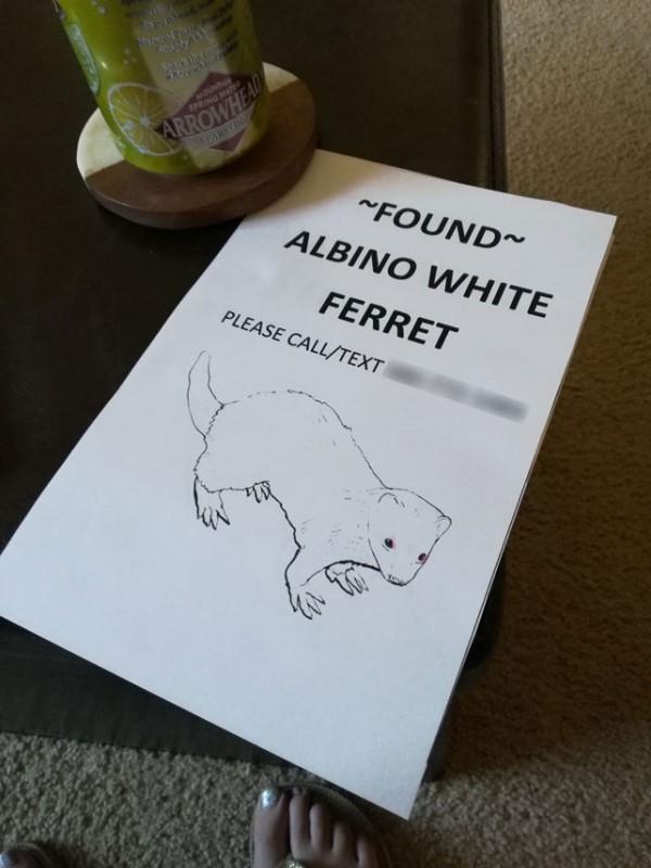 <br> 潔西卡還在社區發傳單以及訊息,終於在許多天後找到雪貂的主人,順利將牠帶回家!(圖/imgur@bimbumbim)