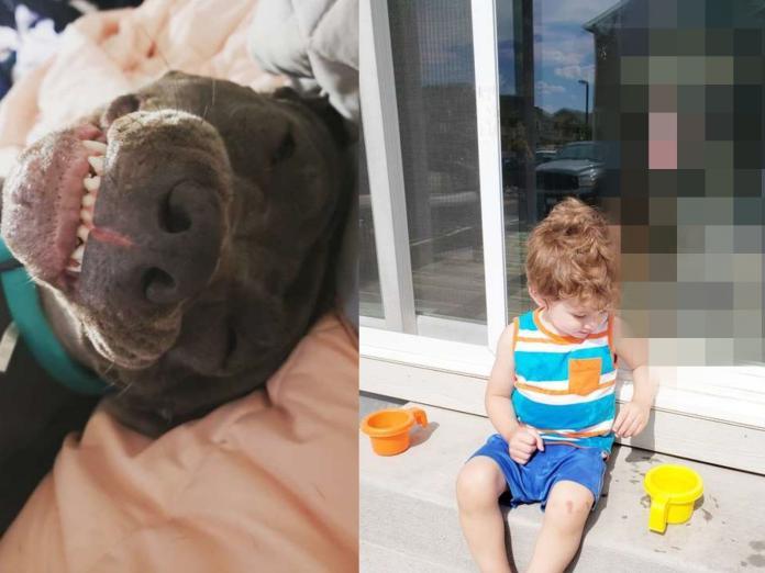老媽想為小兒子拍網美照 愛犬卻亂入求關注讓全家樂翻!