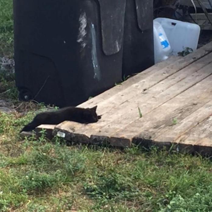 <br> 小黑貓露露無力地躺在大垃圾桶旁邊,不注意會以為只是一坨黑布。(圖/IG@mojoandlulu)