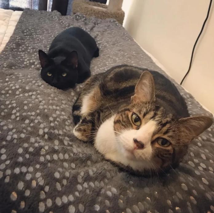 <br> 兩隻貓咪默契很足,常常做出一樣的動作~ (圖/IG@mojoandlulu)