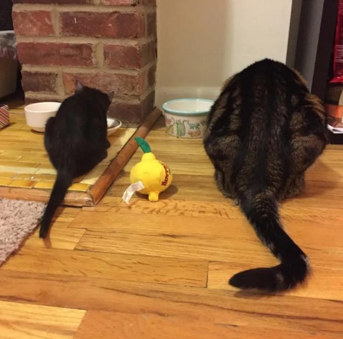 <br> 莫約也教起露露所有當貓咪的規矩。 (圖/IG@mojoandlulu)