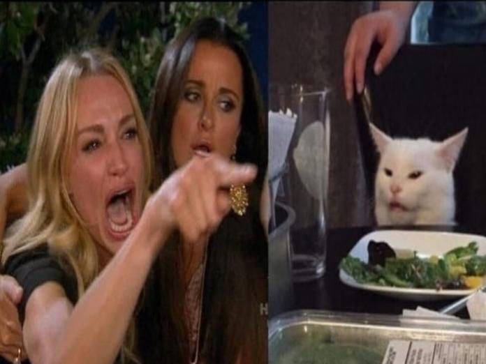 白貓因為一張照片而爆紅 背後原因竟只是討厭「這個」?