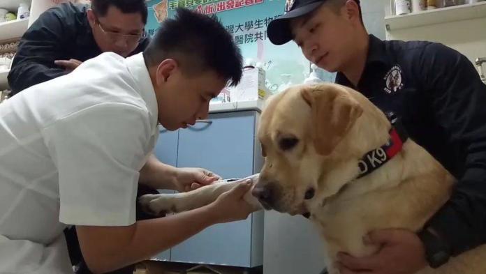 ▲新北市警犬「福星」11月15日來到新北市政府動保處健康檢查。(圖/新北市動保處提供)