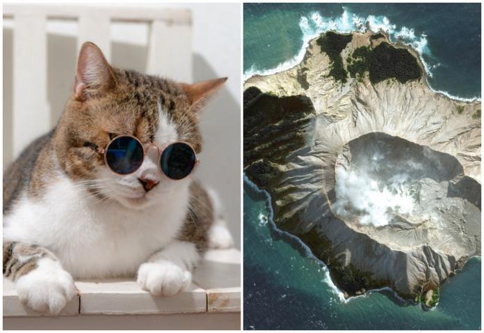 紐西蘭白島多次<b>火山爆發</b> 最慘人類全滅剩一隻活貓成島主