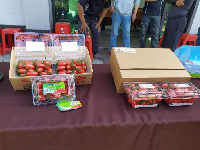 <br> ▲好吃的蕃茄成熟了,大家趕快來品嘗。(圖/記者葉靜美攝,2019.12.10)