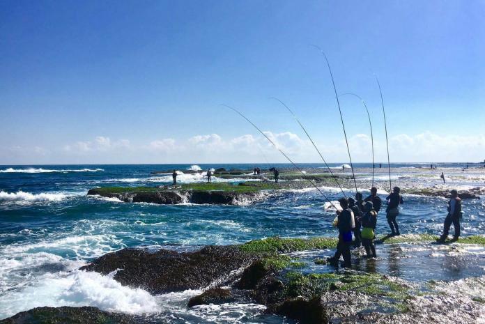 ▲海岸邊釣客成列、釣竿成排,不畏寒風,只為白毛。(圖/新北農業局提供)