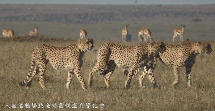 《地球的孩子》影片中紀錄了肯亞壯闊草原上的野生動物、絕美空拍視角令人驚艷。(翻攝自YouTube地球的孩子)
