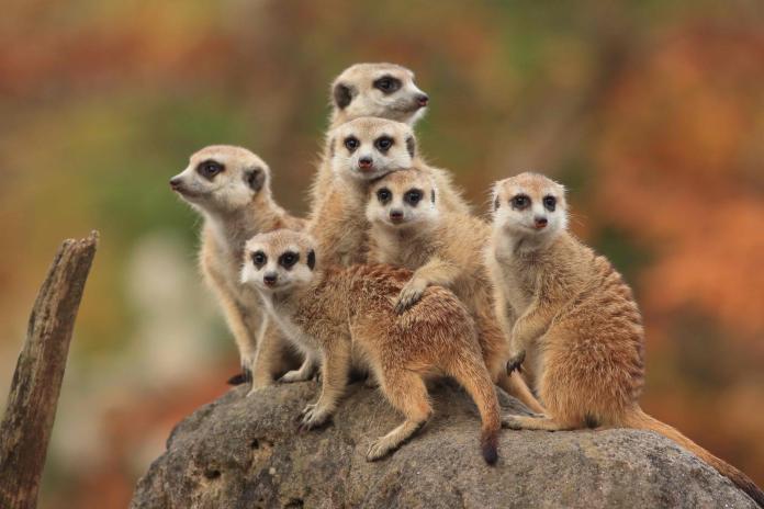 狐獴媽媽溫芳玲 紀錄肯亞象群孤兒院 籲<b>動物保育</b>