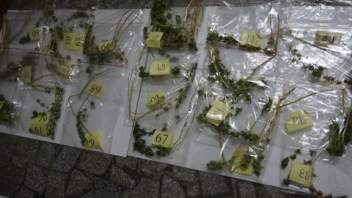 <br> ▲警方查獲的31株乾燥大麻葉(圖/警方提供)