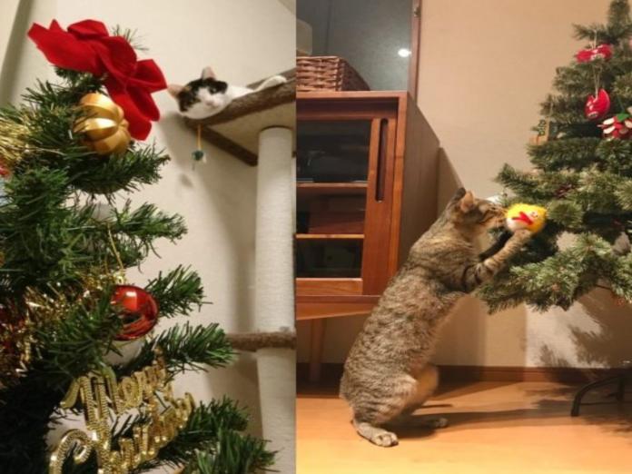 奴才開心裝飾聖誕樹忘了家有破壞神 下場只能淪為貓玩具了