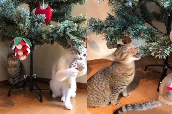 <br> 組裝聖誕樹時,早已有人在樹下等候,整個過程充滿不安……(圖/twitter@omochi_nam01)