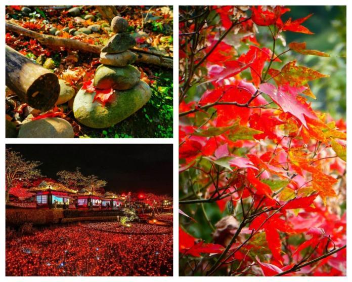 來去好楓景 <b>秋冬</b>就是要追楓去