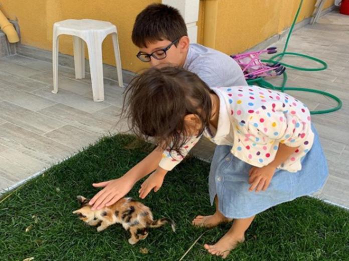 女兒在土耳其交到貓咪朋友 吳鳳拍下暖心畫面分享育兒經