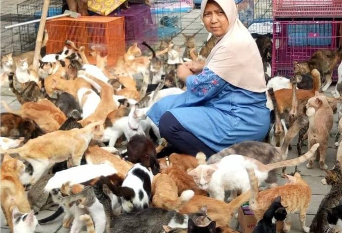 超過250隻貓咪住同屋!印尼媽媽救治貓咪愛滿人間