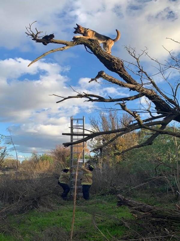 牧羊犬追貓竟爬上樹頂腳軟下不來 笨汪:阿母救我!