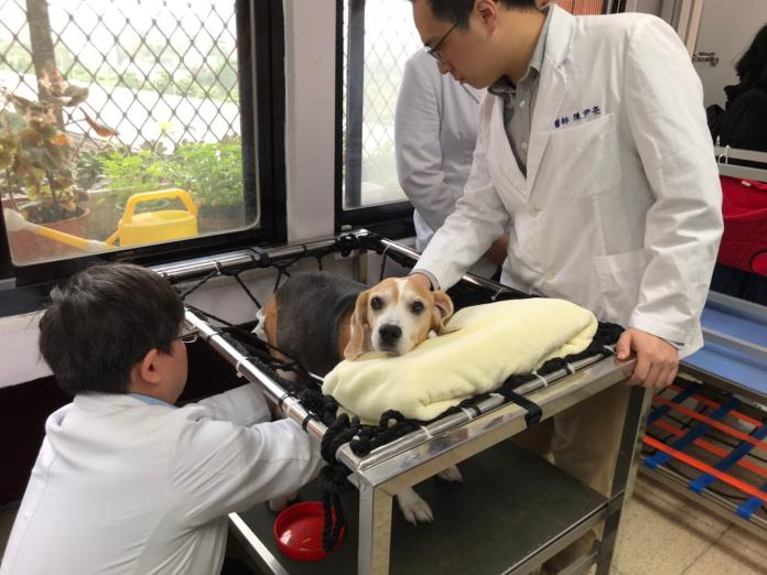 ▲台大獸醫院提供結合中西醫的各式物理治療與復健設備。(圖/記者賴志昶攝)