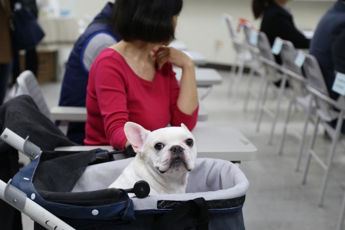 「毛孩長照」也很重要!北市攜手台大成立動物安養機構