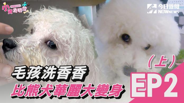 【小資去叨位EP2】毛孩洗香香 比熊犬華麗大變身(上)