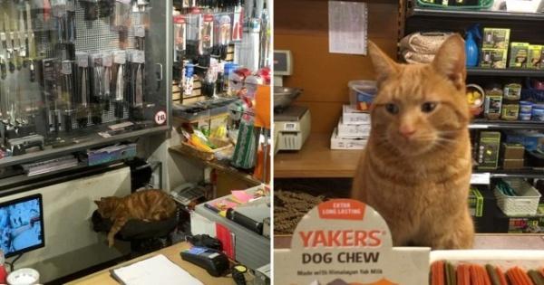 橘貓每天準時出門上班 征服整條商店街成為當地明星!