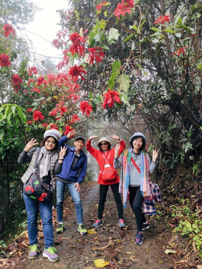 <br> ▲原住民部落的聖誕紅讓人驚豔。(圖/陳汶彬攝影)