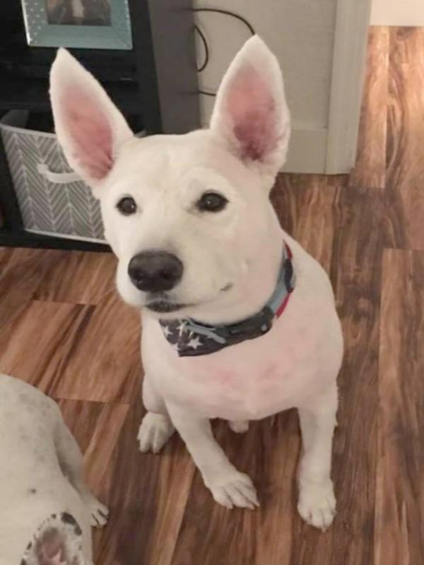 <br> 當她進入美容院找不到自己的愛犬,卻看到一隻「小白」直盯著自己看(圖/Caters News Agency)