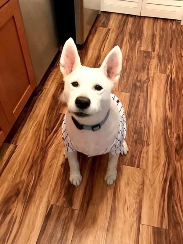 <br> 卡莉最後只能幫牠穿上衣服,避免牠的皮膚被豔陽曬傷,而且從此之後他們就再也沒帶狗狗去過那間美容院了(圖/Caters News Agency)