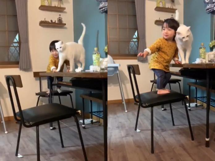 超暖白貓褓姆守護小鏟屎官 不讓爬上桌網友全融化!